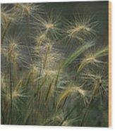 Foxtail Barley Wood Print