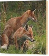 Foxy Pair Wood Print by Jacqui Collett