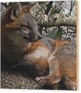 Foxy's Naptime Wood Print