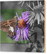 Framed Butterfly Wood Print