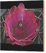 Framed Fuchsia Cactus Flower Wood Print