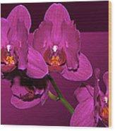 Framed Orchids Wood Print