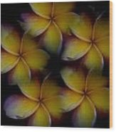 Frangipani Circle Of Color Wood Print