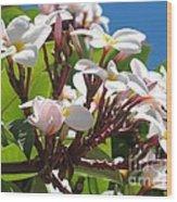 Frangipanier - Plumeria - Ile De La Reunion - Reunion Island Wood Print
