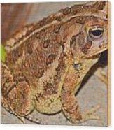 Freddie The Frog Wood Print