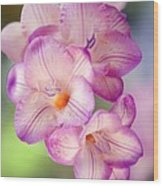 Freesia Sp Wood Print