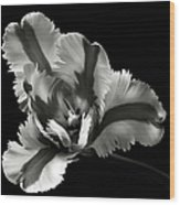French Tulip In Black And White Wood Print