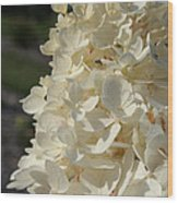 French Vanilla Hydrangea Wood Print