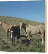 Fresh Horses Wood Print