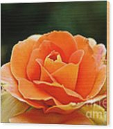 Fresh Peach Petals Wood Print