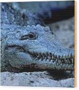 Freshwater Crocodile Wood Print