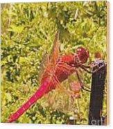 Friendly Dragon Fly Wood Print