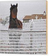 Friendly Horse Wood Print