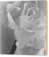 Friendship Rose In Black And White Wood Print by Mark J Seefeldt