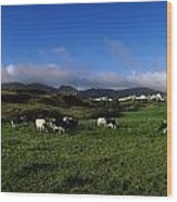 Friesian Cattle, Allihies, Co Cork Wood Print