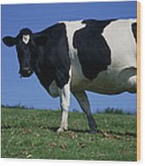 Friesian Cow Wood Print