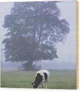 Friesian Cow, Ireland Wood Print