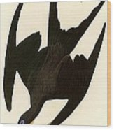 Frigate Bird Wood Print by Pg Reproductions