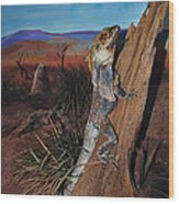 Frill-necked Lizard Wood Print