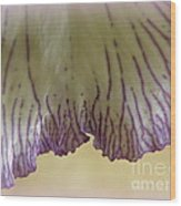 Fringe Wood Print
