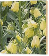 Fritillaria Pallidiflora Wood Print
