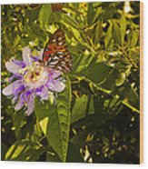 Fritillary On A Passion Flower  Wood Print