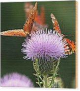 Fritillary Wings And Thistles Wood Print
