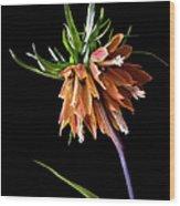 Frittilaria Wood Print