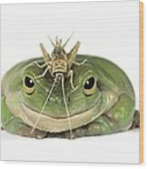 Frog And Grasshopper Wood Print