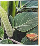 Frog And Moonflower Wood Print