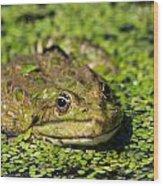 Frog Wood Print