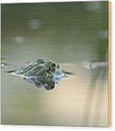 Frog Hunting Bugs Wood Print