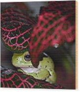 Frog On A Leaf Wood Print