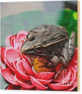 Frog On Lily Pad Two Wood Print