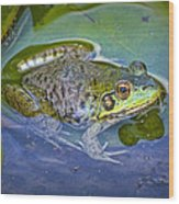 Frog Resting On A Lily Pad Wood Print