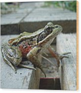 Frog Wood Print by Sophia Petersen
