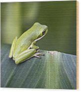 Froggie On A Leaf Wood Print
