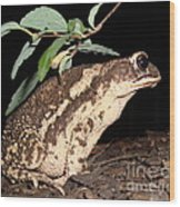 Froggy's Good Side Wood Print