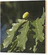 From Little Acorns Wood Print
