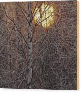 Frost-covered White Birch Trees Wood Print