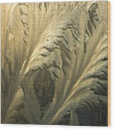 Frost Crystal Patterns On Glass, Ross Wood Print