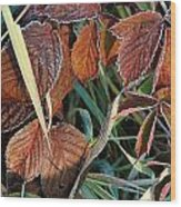 Frost On Leaves No. 2 Wood Print