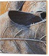 Frost On Oak Leaf Wood Print