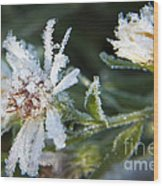Frostbite Flower Wood Print by Darleen Stry