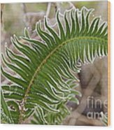 Frosted Fern Wood Print