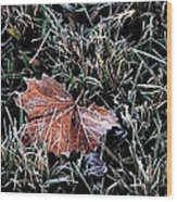Frosted Leaf Wood Print