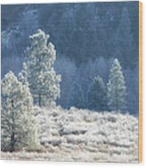 Frosted Morning Wood Print