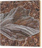 Frosted Raspberry Leaf Wood Print