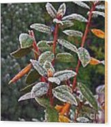 Frosted Rhodie Wood Print