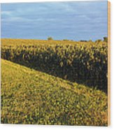 Frosted Soybeans Wood Print